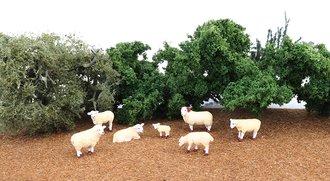 O Sheep