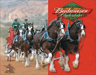 Tin Sign - Budweiser - Clydesdales