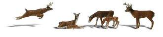 O Deer (6)